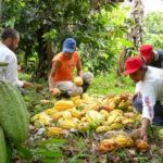 En Côte d'Ivoire 96% des terres restent à être immatriculées par l'Etat