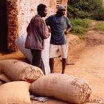ADAMA Bictogo en voie d'obtenir le marché du recensement des planteurs