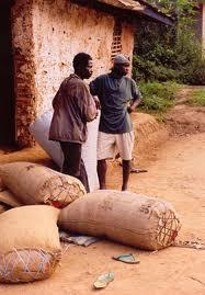 Le kilogramme de cacao en Côte d'Ivoire à 1.000fcfa