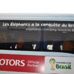 elephants-cotedivoire