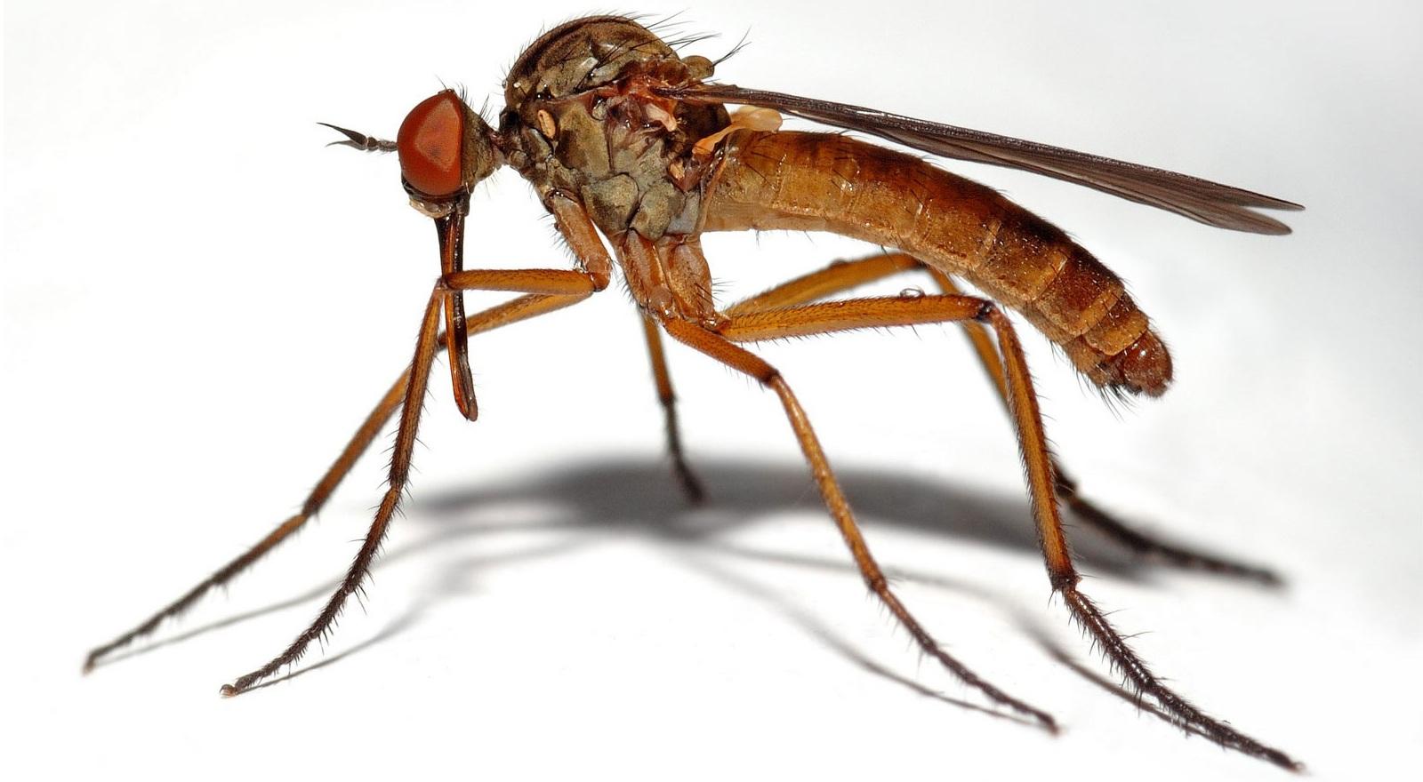 la transmission du paludisme
