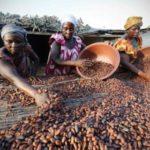 Le gouvernement ivoirien réduit le taux du DUS sur le cacao transformé