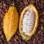 Le Bafing produit du Cacao